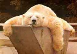 lazy lazy lazzzzzzz...